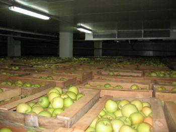 kholodilnye-kamery-dlya-khraneniya-fruktov